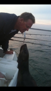 Warren feeding seal from boat